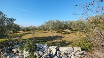 Poljoprivredno zemljište na prodaju Bale